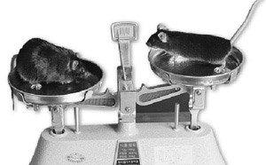 인간 위해 몸 바치는 실험동물들