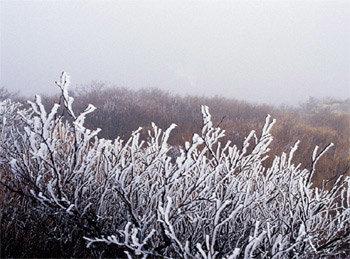 꼭꼭 숨은 겨울 서정 강원도 태백·정선