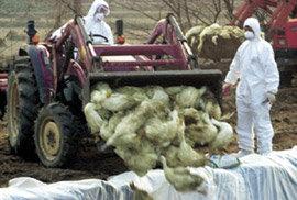 가축 전염병 막을 '파수꾼'이 없다