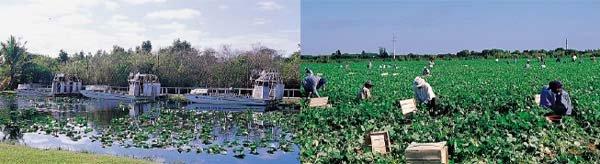 플로리다 에버글레이즈 국립공원