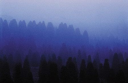 푸른 새벽