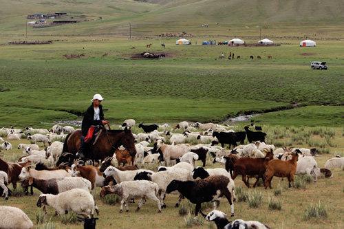 인하대 의료팀 몽골 의료봉사