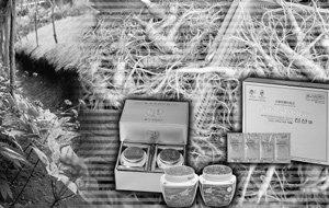 인삼 속 숨은 진주 '진산'의 실체