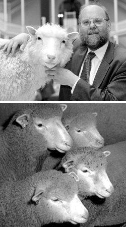 동물복제 양 '돌리' vs 인간복제 양 '폴리'