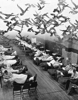 2008년 '인플루엔자 대학살'說