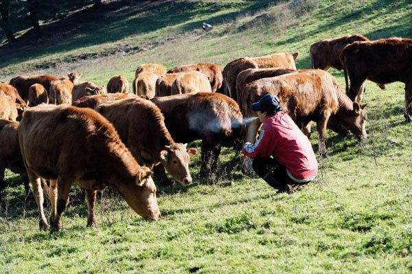 소의 전쟁