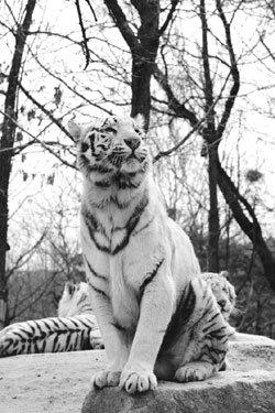 사자, 호랑이 권력다툼 10년의 기록