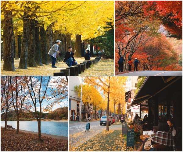 가을, 낙엽을 즈려 밟고…