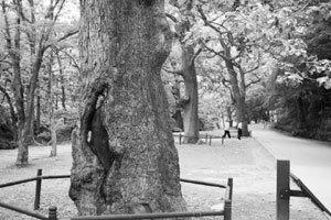 유별난 백양사 봄 숲