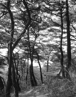 마음을 씻고 마음을 여는 개심사 솔숲