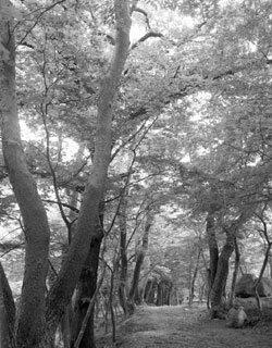 직지사 다섯 암자 숲길 걷기