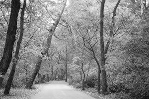법주사 솔숲