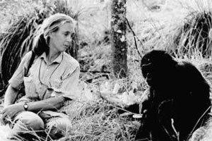침팬지들의 代母  제인 구달