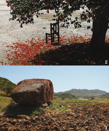 동백꽃과 보리의 나라 전남 영광 용암마을