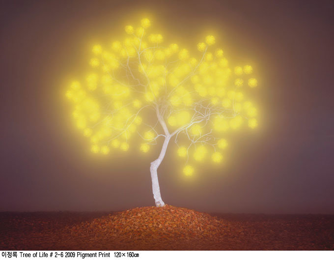 빛과 상상으로 써내려간 자연