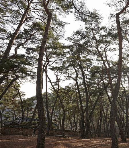 외로운 섬, 울창한 솔숲 바람결에 실려온 피냄새
