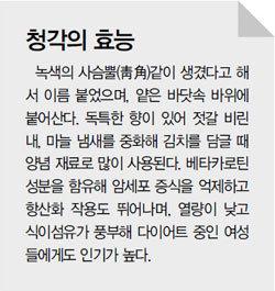 바닷속 '천연 항암제' 청각 양기 세우는 기양초(起陽草) 부추