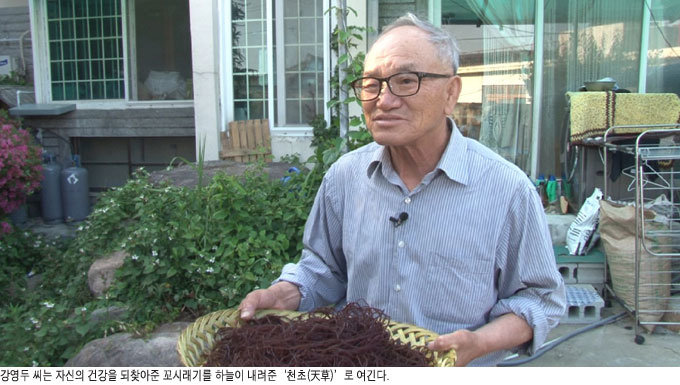 혈당 낮추는 '바다 국수' 꼬시래기 항산화 효과 뛰어난  생강나무