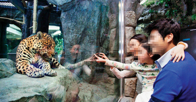 """'반쪽짜리' 누더기 된 동물원법 """"동물쇼는 그대로 계속된다"""""""