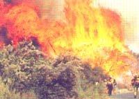 가뭄 … 산불 … 집중호우 … 미국, 물불에 정신 못 차리네