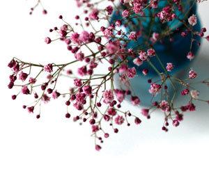 만년 조연에서 주연으로 안개꽃의 대변신
