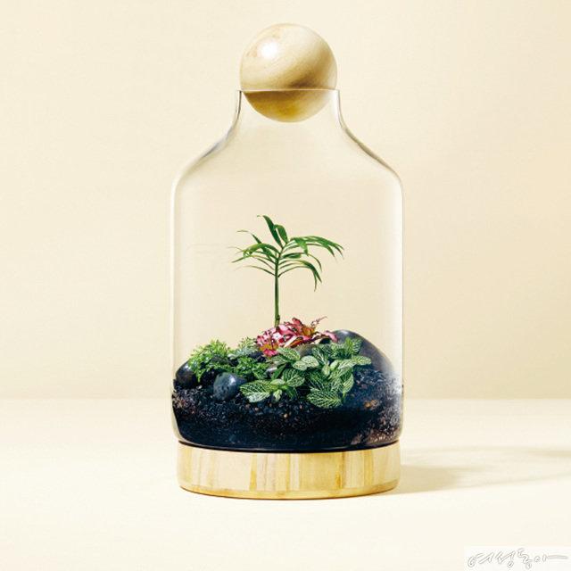 작은 병, 커다란 정원 Terrarium