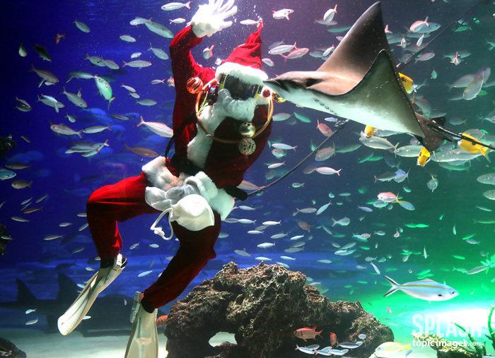상어를 만나는 방법, 산타로 변신한 다이버
