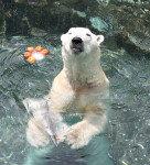 한국 떠나는 북극곰 통키가 보내는 편지