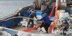 명태 포획 금지… 오징어-갈치도 함부로 못 잡는다