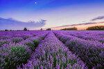 참좋은여행, '라벤더 향기' 만끽 프랑스 10일 일주