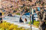 [김재범 기자의 투얼로지] 벚꽃물결·키스로드…사랑 넘치는 캠퍼스의 봄