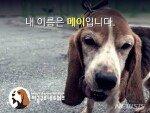 정부, '불법 동물실험 의혹' 서울대 연구팀 조사…위법시 제재