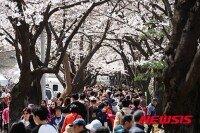 서울시내 봄꽃, 27일부터 개화…예년보다 1~4일 빠를듯