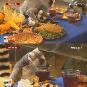 동물들의 추수감사절… 칠면조 모양 파이·와인색 음료 '화려한 만찬'