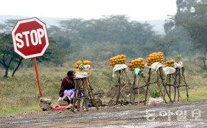 홍진환 기자의 케냐에서 희망찾기, '손님은 언제… 간절한 기다림'