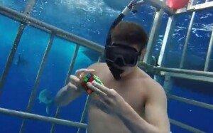 [영상] 상어들 배경삼아 15초만에 큐브 맞추는 남성