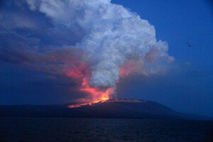 갈라파고스 화산 폭발… 멸종 위기종 '핑크 이구아나' 서식지 위협