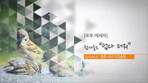 """[영상] 포토에세이…참새들도 """"덥다 더워"""""""