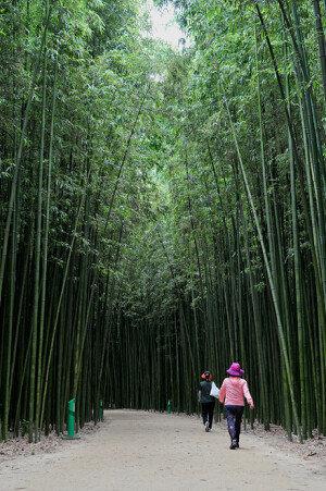 울산 대나무숲 사잇길에서 초록 힐링