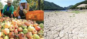 폭염에 속타는 농어민들… '양식장 떼죽음·농경지 쑥대밭'