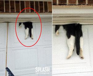 차고 문에 낀 고양이, 구조 후에 상태는?
