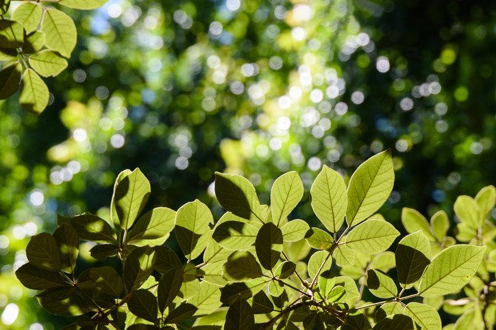 자연을 잠깐 바라만봐도 생산성이 높아진다?