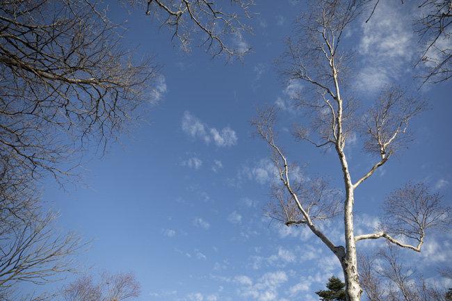 맨몸으로 겨울을 맞이하는 나무.