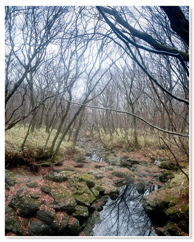 1월인데도 하단부 계곡은 가을 풍경이다. [지호영 기자]