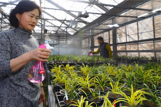 춘란은 농가 소득을 증대시키는 아이템으로 각광받는다. '천향원'에서 난을 가꾸는 모습. [박해윤 기자]