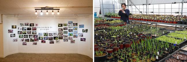 천리포수목원의 다양한 목련 꽃 사진을 전시한 밀러가든갤러리(왼쪽)와묘목원. [김형우 기자]