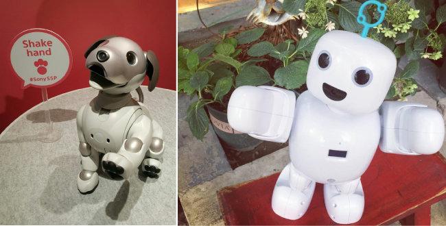 반려로봇 소니 아이보(왼쪽)와 서큘러스 파이보. [소니 제공, 인스타그램 캡쳐]