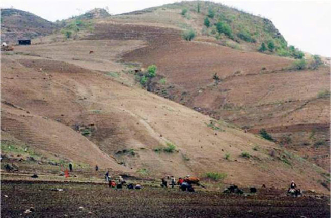 북한 산림 복원, '원전 건설'이 답!