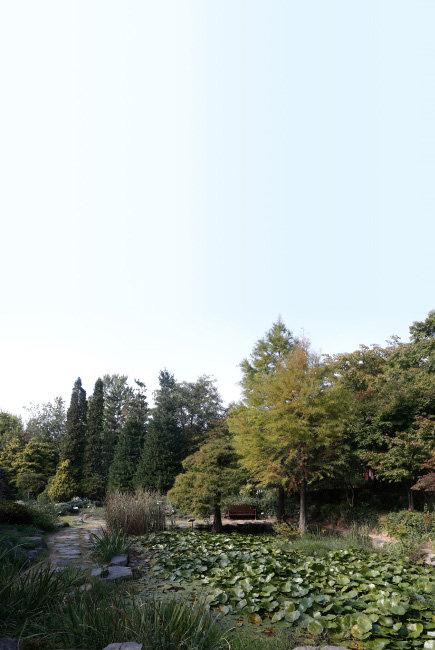 암석원 연못. 마치 물 위에 떠 있는 것처럼 보이는 낙우송은 방송에 자주 소개돼 유명해졌다.