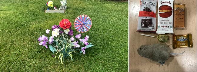 알타메사 추모공원 내 잔디 위에 놓인 꽃다발. 아무 표시도 없는 곳에 꽃다발이 수북이 놓여 있어 필자는 잠시 이곳이 스티브 잡스가 묻힌 곳이 아닐까 생각했다(왼쪽). 지난해 스티브 잡스 집에서 아이들에게 나눠준 핼러윈데이 선물. 초콜릿과 사탕, 생쥐 인형 등이 들어있다.
